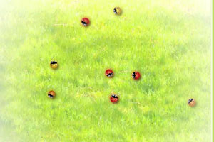 《彩色七星瓢虫》游戏画面1