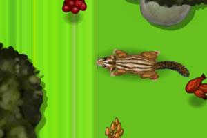 《小花栗鼠中文版》游戏画面1