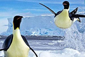 《企鹅寻物》游戏画面1