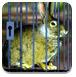 兔子逃出森林铁笼