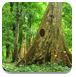 神秘茂密森林逃脱
