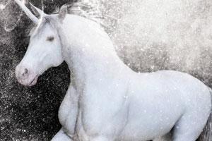白色独角兽找星星
