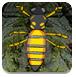 蜜蜂逃出森林