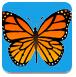 蝴蝶记忆卡