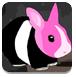 救援黑色兔子