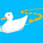 带小鸭回家