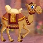 救援小骆驼